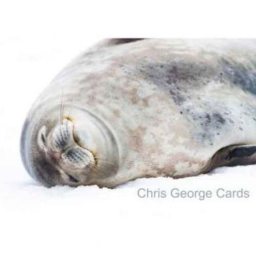 Seal asleep
