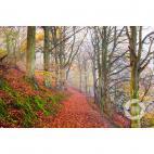 Beech walk Wrekin